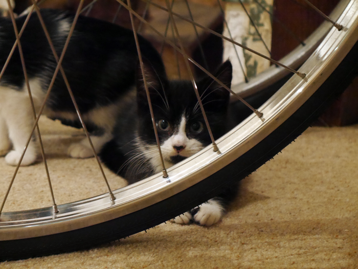 Catnbike