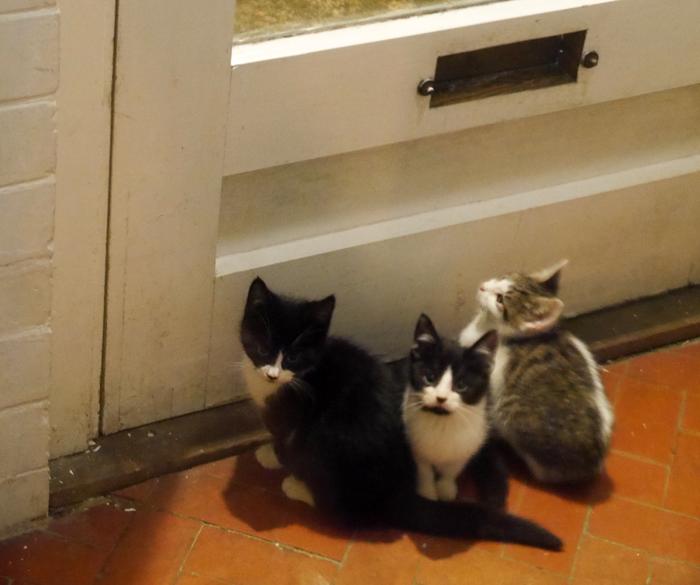 Three-cats-by-door