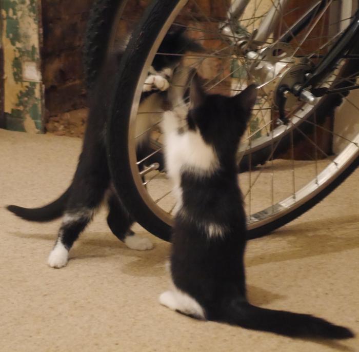 two-cats-n-bike