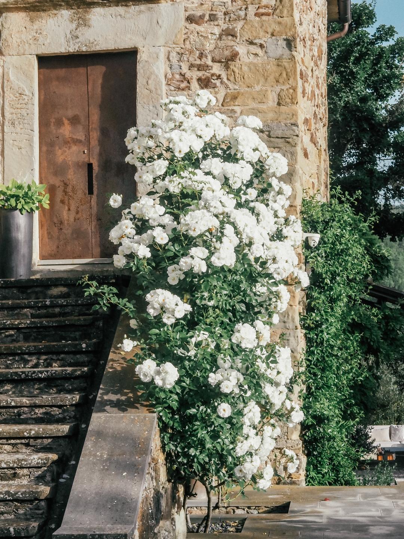 Roses at Torre di Moravola